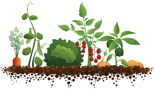 גינת ירק